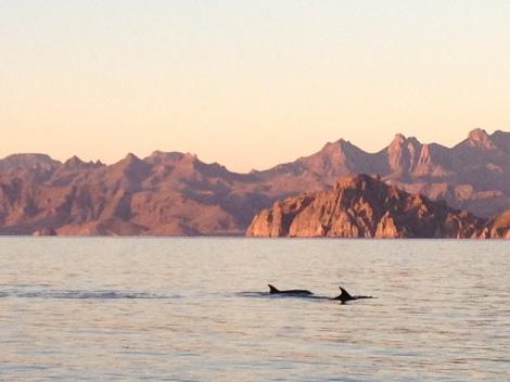 dolphins baja